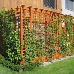 Popínavé-rostliny-na-pergoly-300