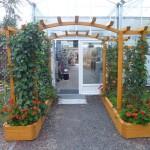 Popínavé-rostliny-na-pergoly-306